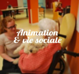 animation-viesociale